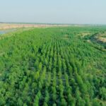 Climate Change and Billion Tree Project in Pakistan