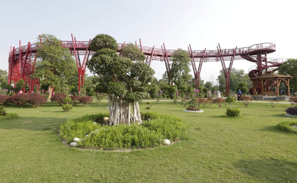 Different Specie Of Tree Are There In Garden